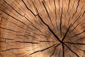 Durch Verrotten oder Verbrennung wird CO2 freigesetzt - durch Bau mit Holz leisten wir unseren Anteil zum Klimaschutz